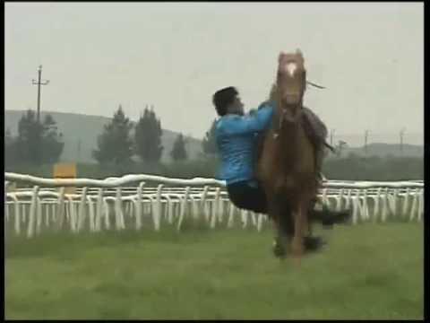Trick Riding with Akhal-Tekes - Holy Cow!!