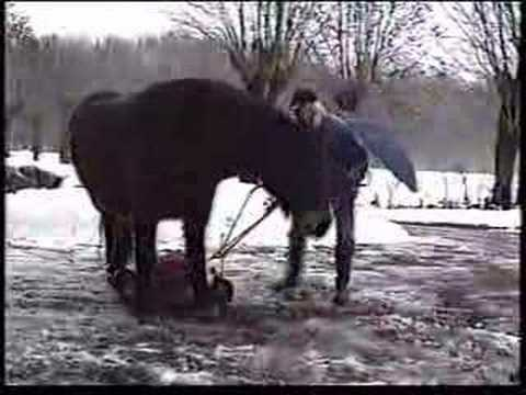 Natural Horsemanship - Swedish Style!