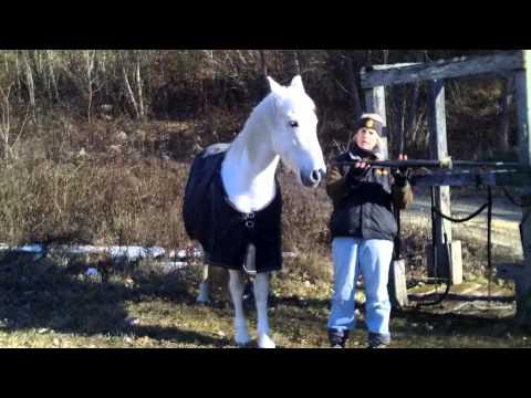 Clicker Training Your Horse to Kill Zombies