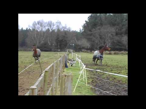 Horses GONE WILD!