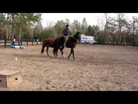 Encore Horse For Sale