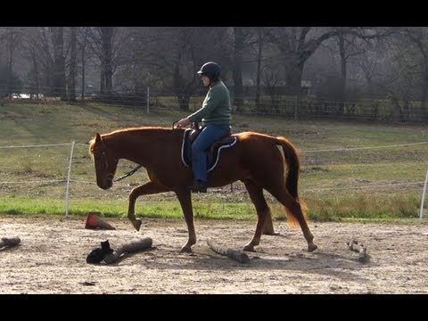 Training a Smooth Gait, Naturally!  Part 2, Preview