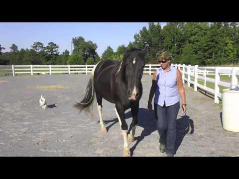 Horse Trainer Linda Salinas