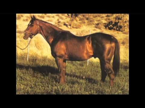 History of the American Quarter Horse