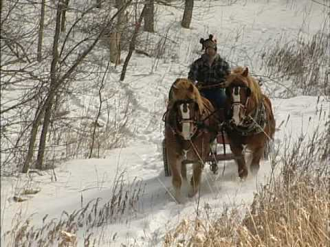 Logging With Horses: Here's a Man Who Enjoys His Job Everyday