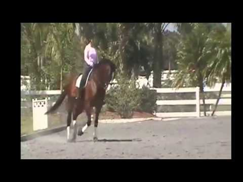 Dressage Training Serpentine Exercise with Trot Transitions