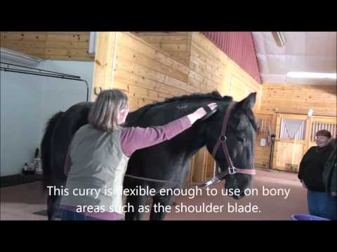 How to Groom Your Horse to Shine Naturally - Step 1: Currying