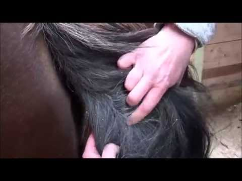 How to Groom Your Horse's Tail