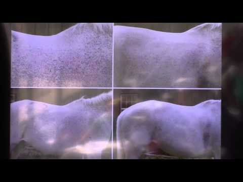 Case Study: Before and After Amino Acids in Horses