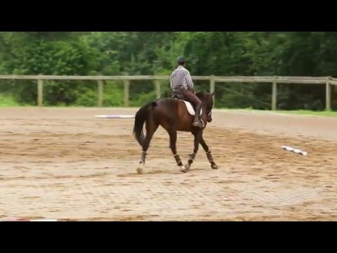 How to Ride a Perfect 20m Circle!