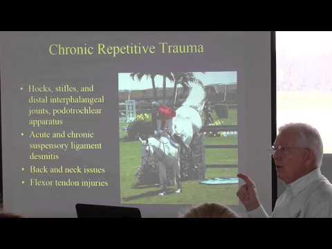 Types of Repetitive Trauma In Horses