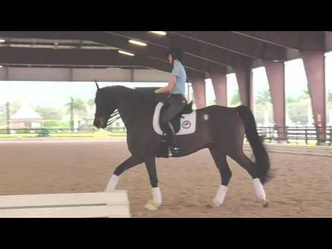 Charlotte Bredahl: 3 Exercises to Increase Ridability