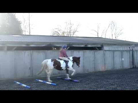 How to Use Trot Poles To Collect and Lengthen the Stride in Dressage