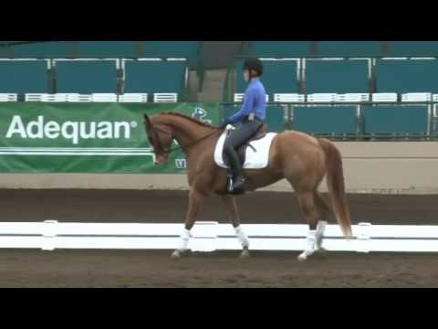 Jeremy Steinberg: Can Your Quarter Horse Do Grand Prix Dressage?
