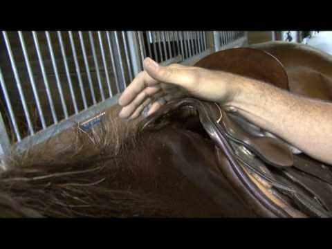 Saddle Fit Tip #9 - Tree Width