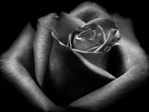 A Single Rose by Brian Crain