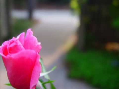 Pictures of Peace - My Photography