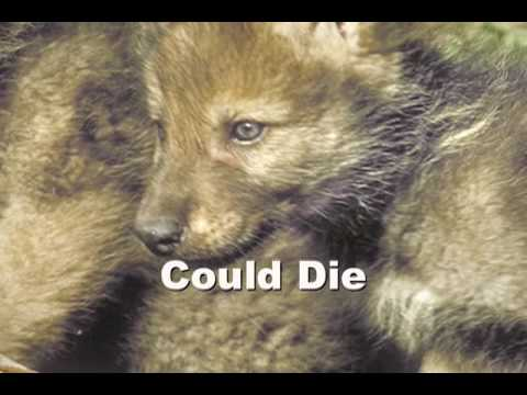 Help Save Wolves...This makes me sad :(