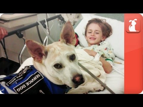 Healing Power Of Pets - Seizure Detecting Dog Helps A Little Boy