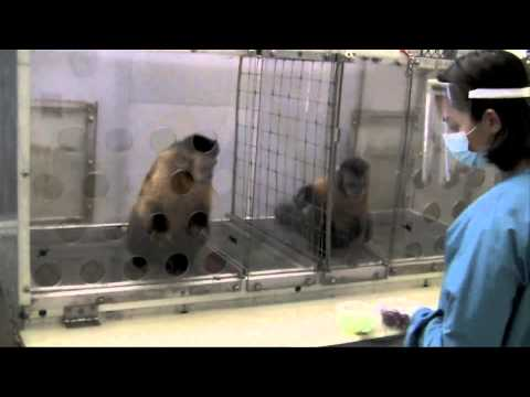 See What Happened When Two Monkeys Were Paid Unequally