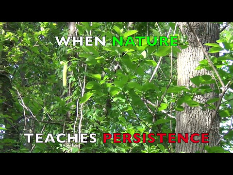 When Nature Teaches Persistence