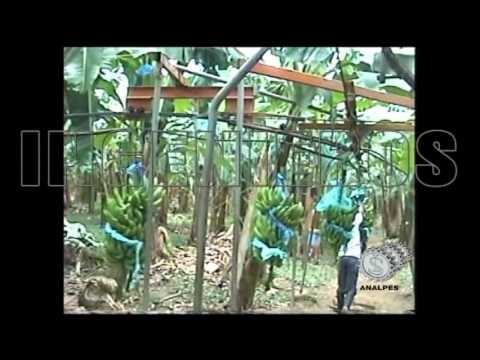 Cable Vía para Banano y Platano. Ingenieros Analpes Ltda. Bogota D.C. Colombia
