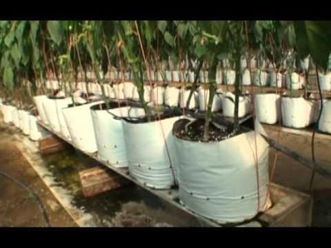 Tercer Diplomado Internacional en Horticultura Protegida