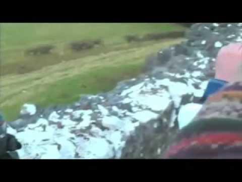 Arte con ovejas