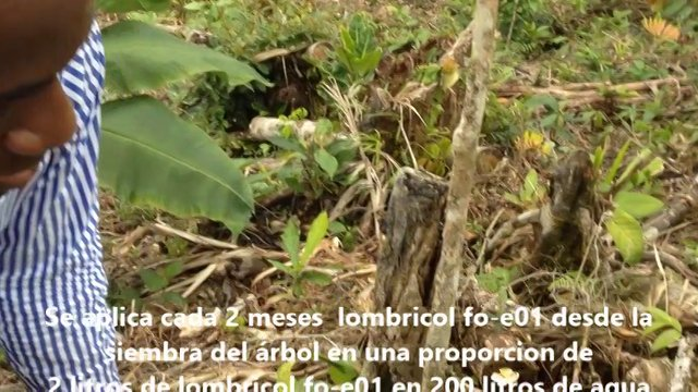RESULTADOS EN SUELO DE MINAS EN QUIBDO CON PLATANO, CACAO Y ARBOLES MADERABLES