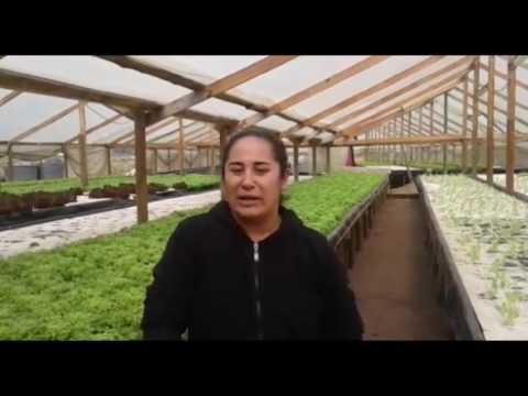Testimonios de la 1era gira de Hidroponía a México