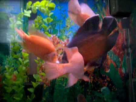 fish 060