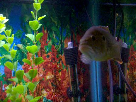 fish 042