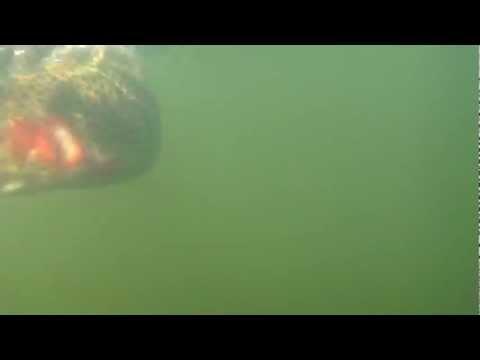 Slab Jiggies underwater trout 12/26/2011