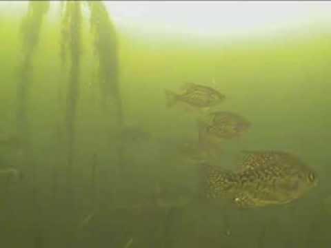 Crappie Ice Fishing - Marcum LX9