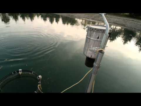 Tabbert Pond 8-7-14 fish feeder