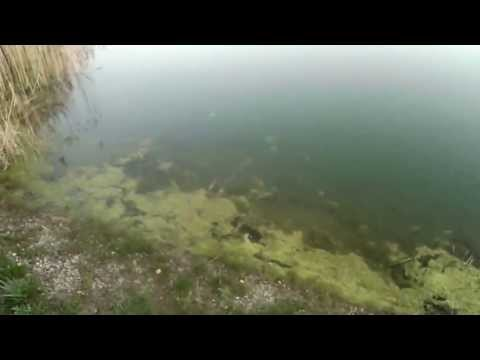 Tabbert pond walkabout