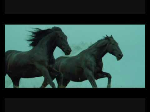 Black horses - Now we are free