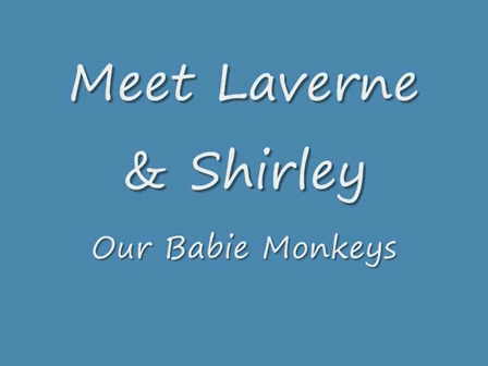 Baby Monkeys in Our Home