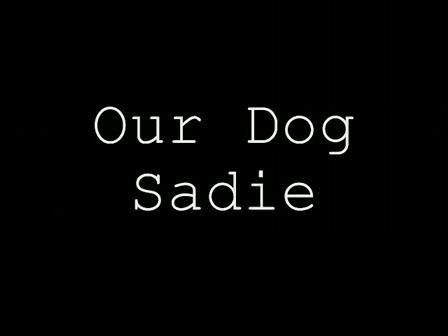 Our Dog Sadie