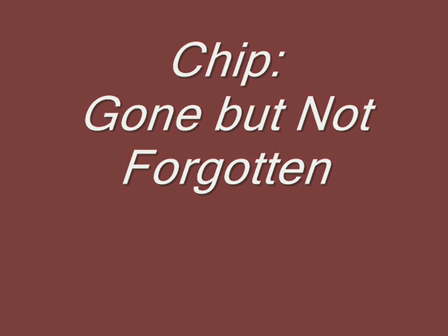 Chip: Gone but Not Forgotten