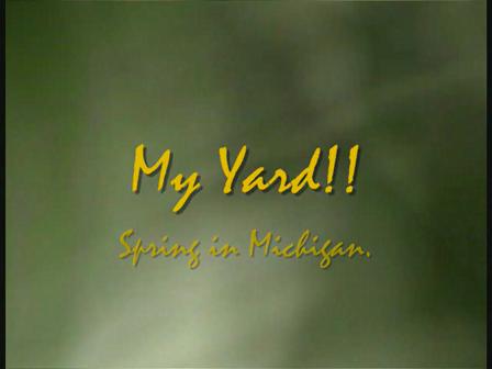 Spring Time in Michigan-My Yard.