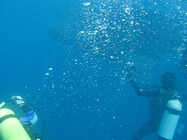 My Whaleshark Encounter