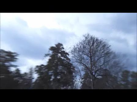 Blackbird Swarm