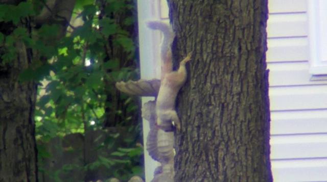 30 Seconds of Albino Squirrel