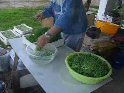 Growing organic barley grass for drinking