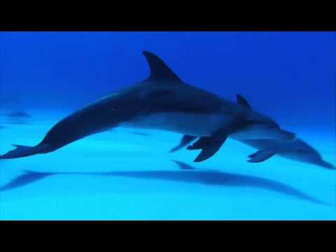 Relaxing Music, the best underwater footage, HD