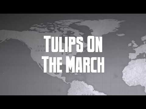 Tulips On The March