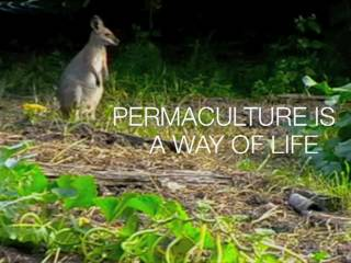 Robyn Francis: Permaculture is a Way of Life