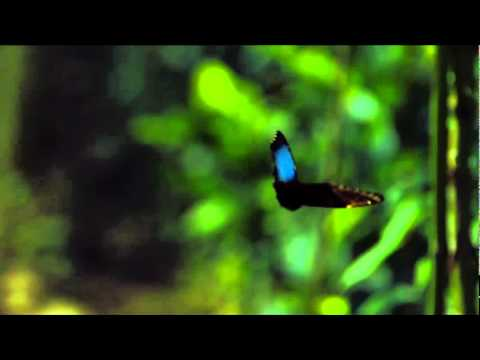 The Hidden Beauty of Pollination-TED Talk-Louie Schwartzberg