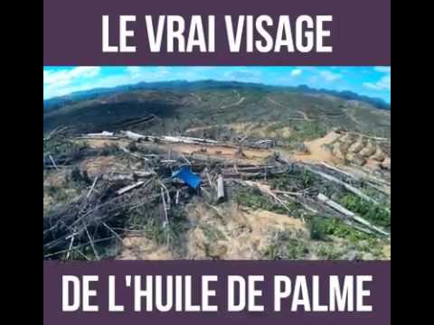 LE VRAI VISAGE DE L'HUILE DE PALME - GENOCIDE - MASSACRE/ THE TRUE FACE OF PALM OIL - GENOCIDE - MAS